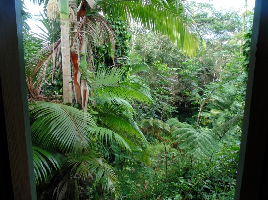The rainforest view from our bedroom
