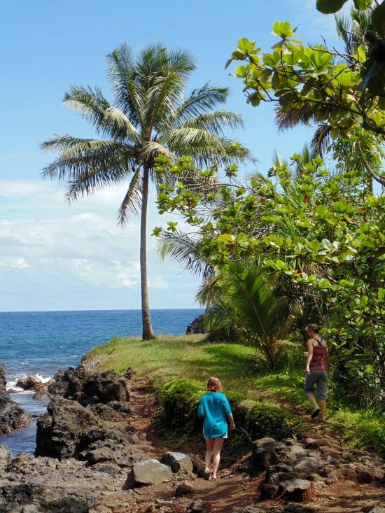 lone palm tree