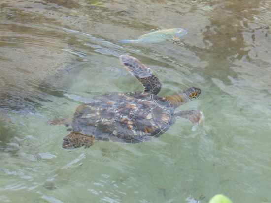 I loved watching the sea turtles swim
