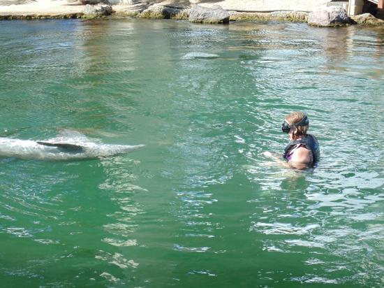 Dolphin experience at the kahala